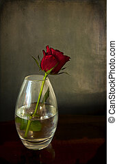 Still life in chiaroscuro, a red rose in a glass vase with reflections