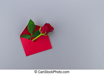 Red rose in envelope on gray background