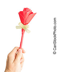red rose in female hand isolated on white background.
