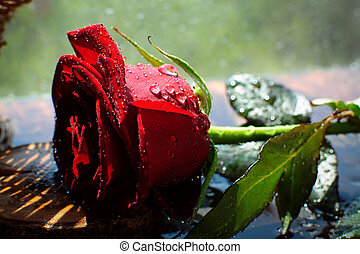 Red rose in the spray of water