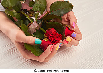 Red rose in well-groomed hands. Young woman hands with...