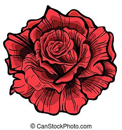 Red rose. Isolated flower on white background.