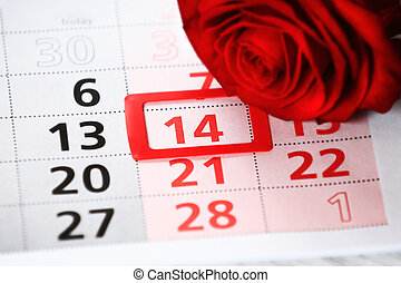 red rose lays on the calendar with the date of February 14...
