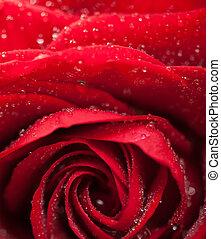 Red rose, low key on black