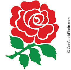 Red Rose national emblem of England isolated on white ...