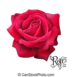 Red rose nature