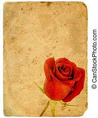 Red Rose. Old postcard.