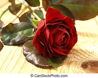 red rose on a beard