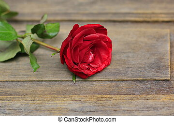 Red rose on a beautiful blurred background.