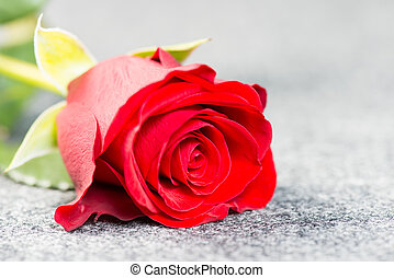 Red rose on a grey cloth