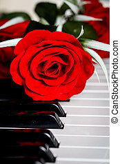 Red rose on a piano