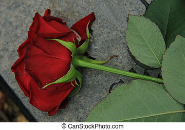 Red rose on a stone