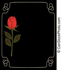 Red rose on black background with golden frame