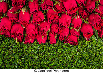 Red rose on green grass background