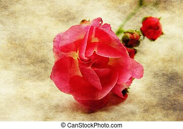 Red rose on grunge background