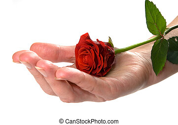 Red rose on hand conceptual