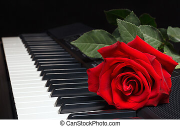 Red rose on keyboard of the synth on black background