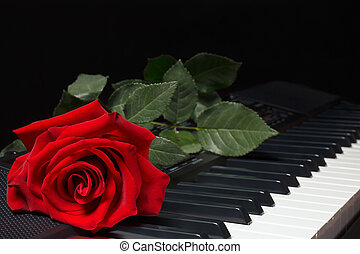 Red rose on keyboard of the synthesizer on black background
