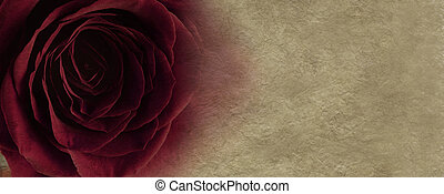 Red rose on parchment background