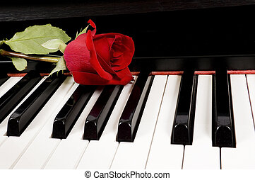 A single beautiful red rose lying on top of a piano keyboard