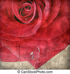 Red rose on the old paper