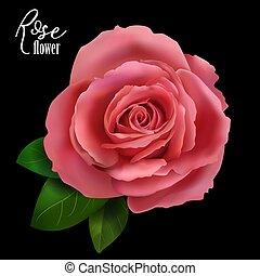 Red rose on white background. Vector illustration.