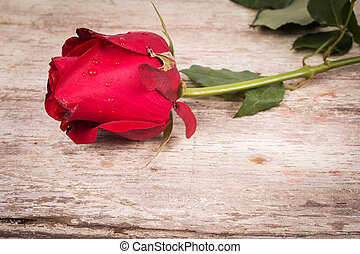 red rose on wooden background