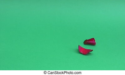 Red rose petals falling on green background isolated