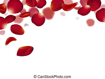Red rose petals falling on white background vector illustration