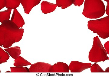 Red rose petals frame border, white copy space