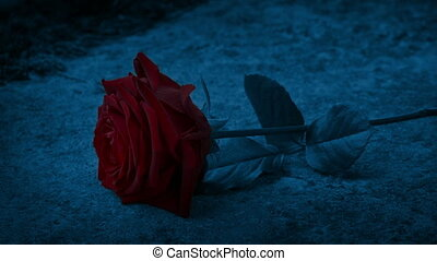 Hand puts a red rose onto a stone surface