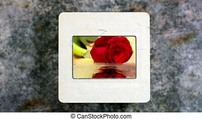 Red Rose Reflecting In The Water on vintage slide film