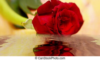 Red rose reflecting in the water