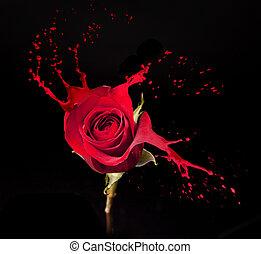red rose splashes