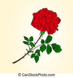 Red rose stem vector.eps