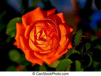 Red rose vector isolated on background