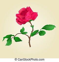 Red rose vintage vector.eps