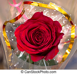 red rose with blurred background