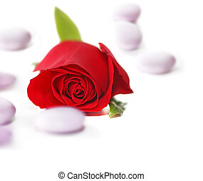 Red Rose with candy on white