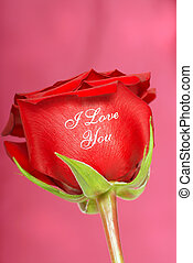 Red rose with I Love You printed on it