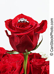 Red rose with ring on white
