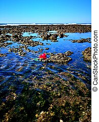red roses and rocks in the blue sea