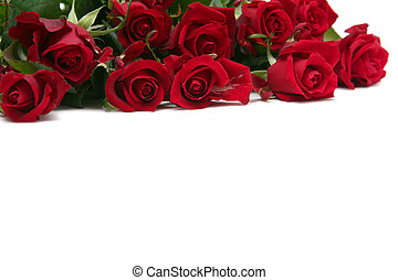 Red roses - Beautiful red roses on a white background
