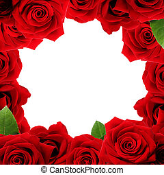 Red roses boarder with blank white background