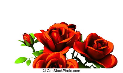 Red roses bouquet on white text space. Loop able 3DCG render...