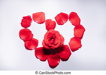 Red roses buds on white background. Flat lay, top view. Valentines background