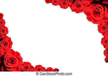 red roses buds on white background, top view. Valentines background
