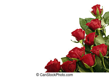 Bunch of red roses at the right bottom corner with text free space.