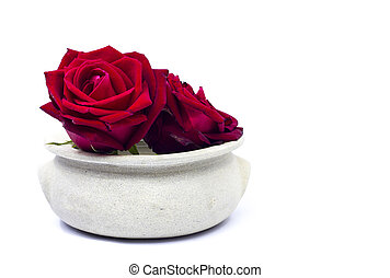 red roses  in a pot on white background