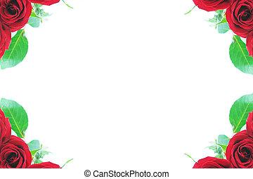 Red roses in corners - Beautiful red roses adorn the corner ...